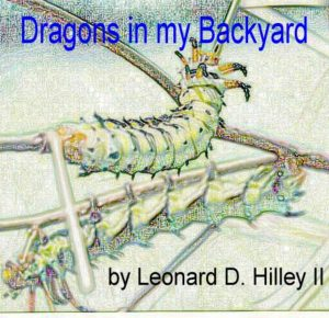 dragons-backyard